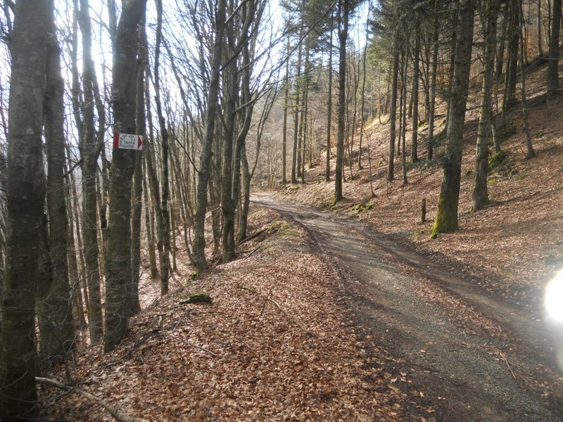Sentiero CAI 167