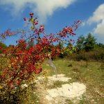 Due giorni in Calvana: Trekking da Prato a Castiglione dei Pepoli tra natura e storia