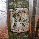 Col CAI del Brasimone nei boschi dell'Acquerino