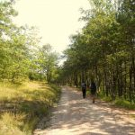6- Sui passi di San Francesco:  da Pieve dei Saddi a Loreto