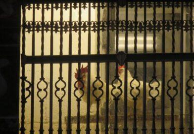 Santo Domingo de la Calzada: la leggenda del gallo e della gallina